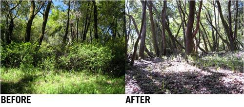 Fire Management Area before and after