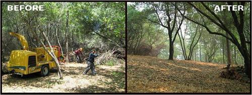 Vegetation management before and after